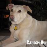 Carson-Gurley